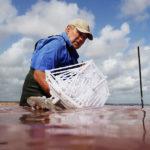 Les artisans du bord de la saline rose